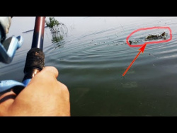Рыбалка на Карпа неожиданный улов большой  карп(сазан) рыбалка на виде 2017о