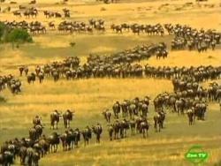 BBC Мир природы. Невидимый Леопард