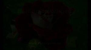 Выбор саженцев роз