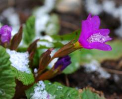 Српризы весны