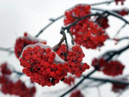 Красное и белое