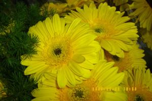 """""""Цветы солнца"""""""