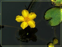 желтый ситцевый