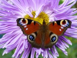 Бабочка)