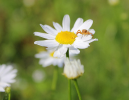 любимый цветок