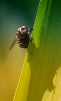 Тёмная сущность беляевской мухи)