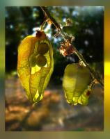 """Осенний """"погрыз"""""""