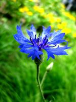 Синева...