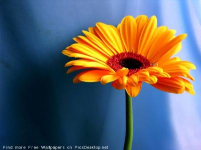 Цветы г. Шахты