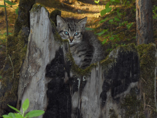 котик в лесу