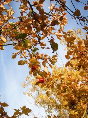 Осень -осень..