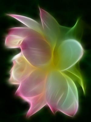 Glowing Lotus