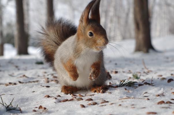 - А у тебя есть ещё орешки?