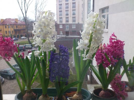 Весна за окном...