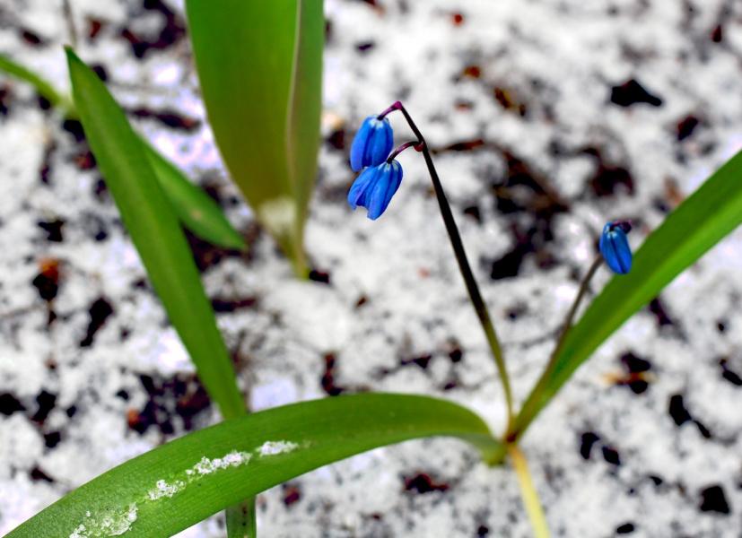 Сюрпризы весны 2
